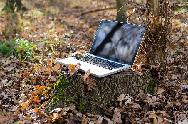 """web and ecology, ecological design, laptop at the bottom of a tree"